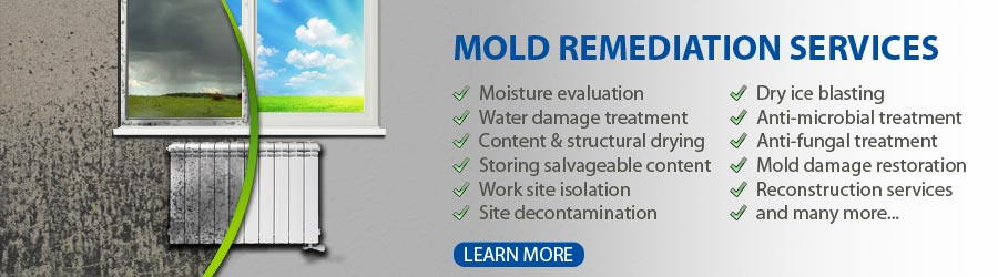 mold removal and inspection queens NY , MOLD REMEDIATION, QUALITY AIR TESTING